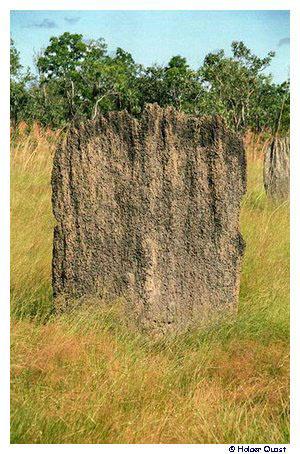 litchfield national park termitenh gel magnetic termite mounds oder magnetic anthills. Black Bedroom Furniture Sets. Home Design Ideas