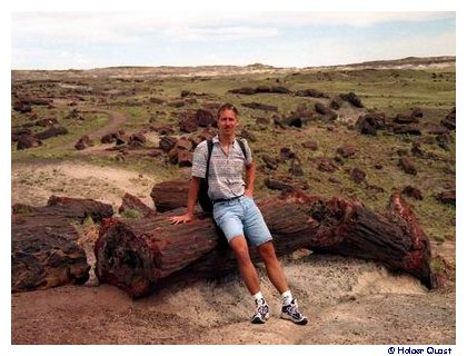 Long Logs, Petrified Forest