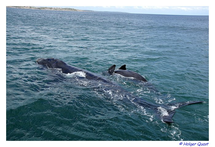 Whale Watching - Ivanhoe Sea Safaris